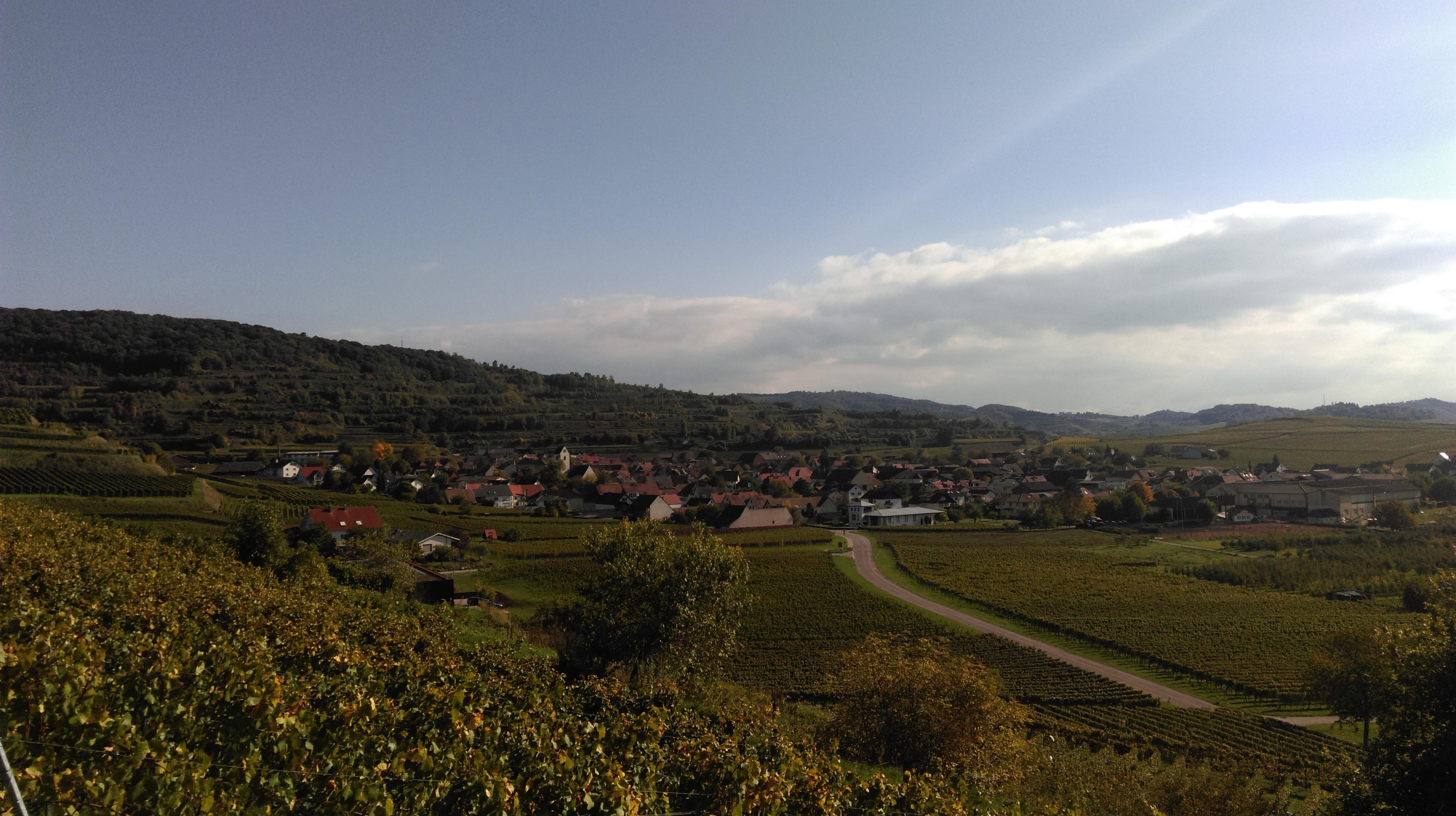 Blick vom Enselberg auf Bischoffingen